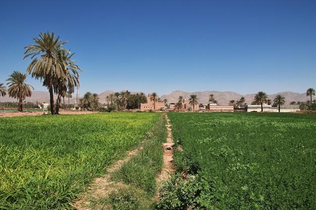サウジアラビアのアシル地域のナジュラーンに近いアラブの村の庭