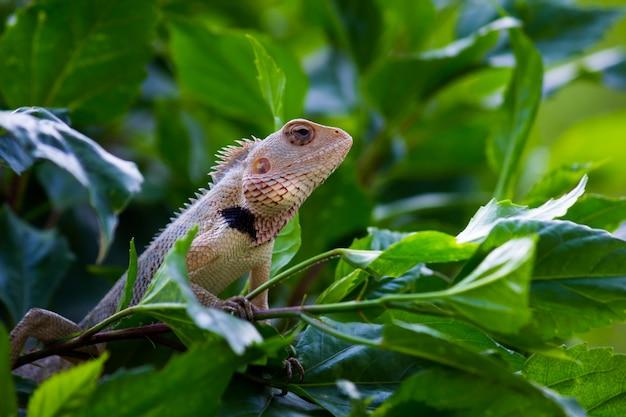 自然環境の植物の上で休んでいる庭のトカゲ