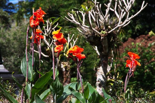 Сад на острове бали, индонезия