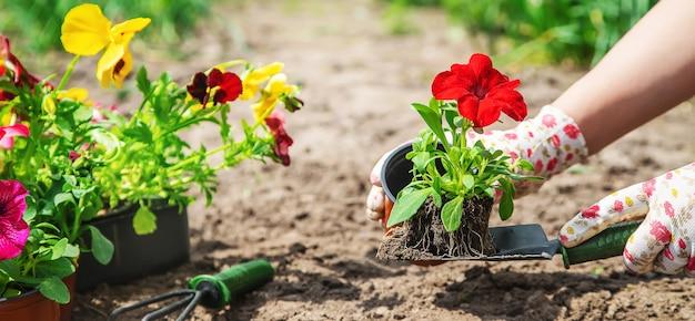 Садовник сажает цветник