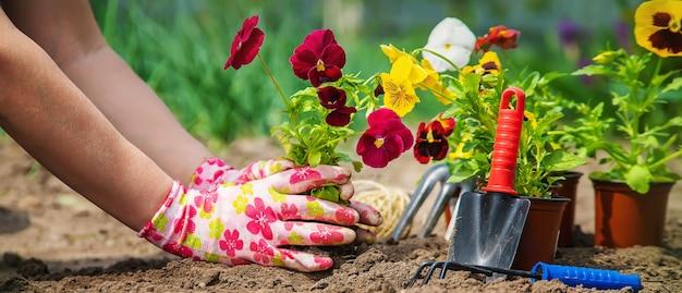 庭師は庭に花を植えています。セレクティブフォーカス。自然。