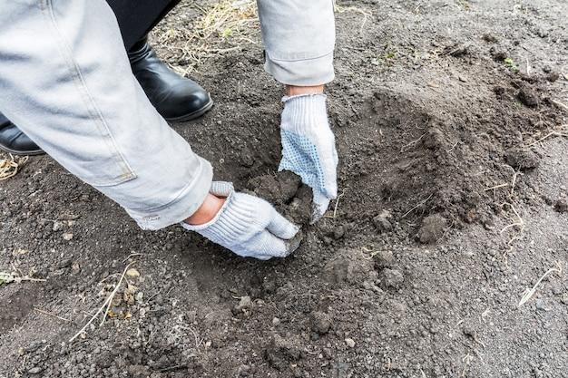 정원사는 야채 씨앗을 심기 위해 자신의 손으로 땅에 구멍을 만듭니다