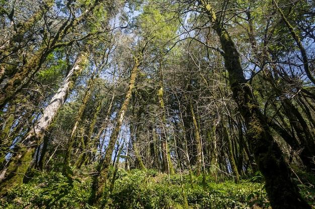 Гигантские стволы деревьев в тропическом лесу