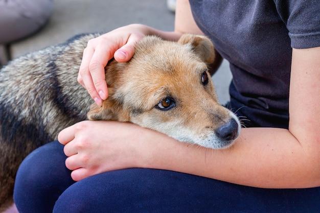 Девушка заботится о больной собаке