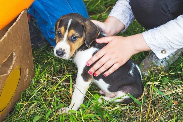 少女は小さな犬を愛撫し、エストニアの猟犬を繁殖させます
