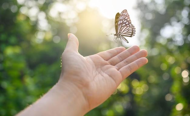 女の子は蝶を瞬間から解放します自由の概念