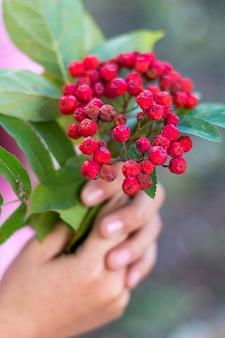 少女は赤い山の灰を手にした枝を持っています_