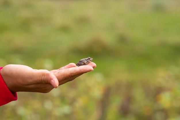 少女は、緑の野原を背景に小さな土のヒキガエルを手のひらに持っています。