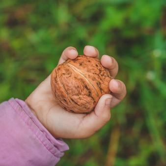 Девушка держит в руках грецкие орехи.