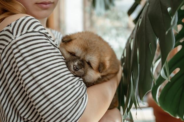 소녀는 작은 푹신한 신생아 강아지를 팔에 안고 있습니다.