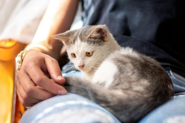 Девушка держит маленького котенка