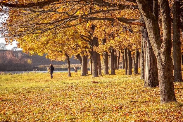 女の子は秋の森を歩いています。木と秋の地面に黄色とオレンジ色の葉