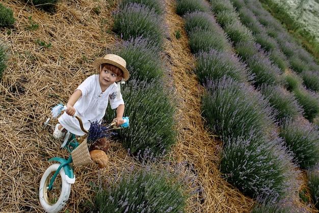 소녀는 자전거를 타고 라벤더 밭을 탄다.