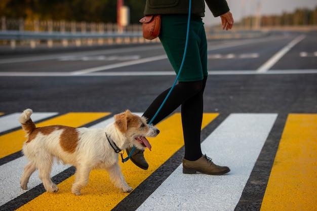 Девушка учит собаку переходить пешеходный переход