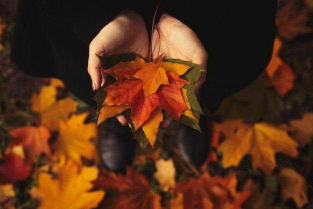 開いた手を持つ少女は森の中で黄色の葉を保持しています。
