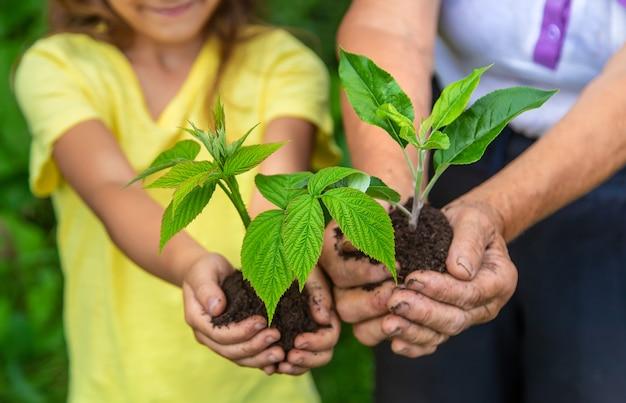 Бабушка и ребенок держат в руках росток растения. выборочный фокус. природа.
