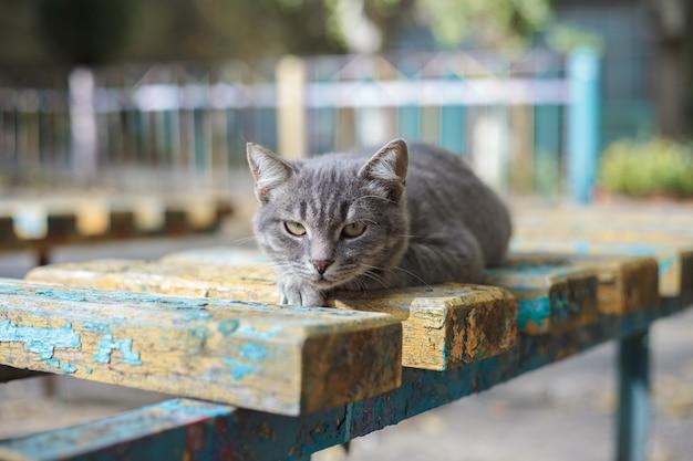 Серый красивый кот лежит на деревянной скамейке на улице. бездомные животные.