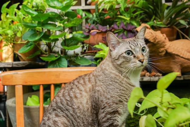 Серый кот сидит и смотрит наружу очень мило.