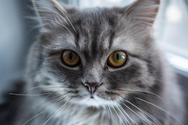 Серая кошка сидит на подоконнике и оглядывается вокруг