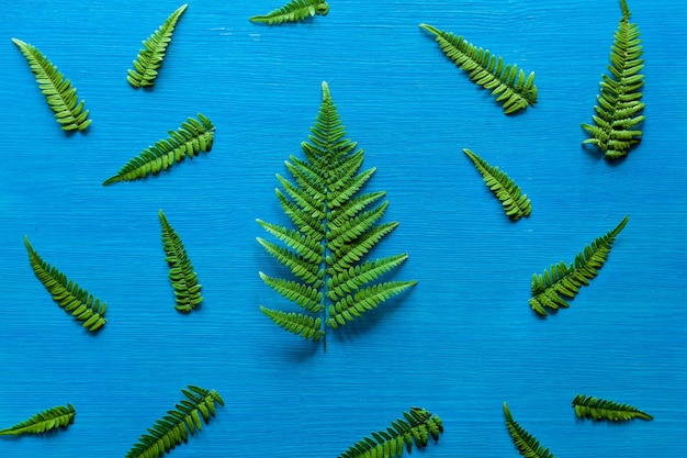 シダの緑の枝は木の青い板の上にあります