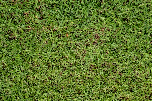 Зеленая трава фон для текстуры природы