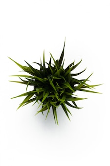 Зеленая трава изолированная на белизне. вид сверху.