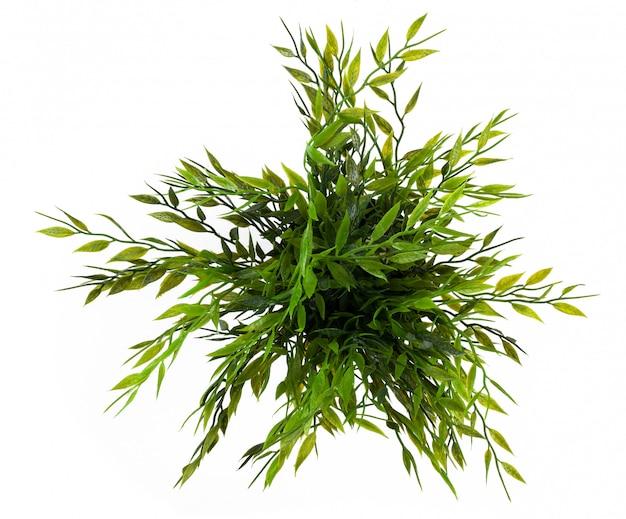 Зеленая трава изолированная на белизне.