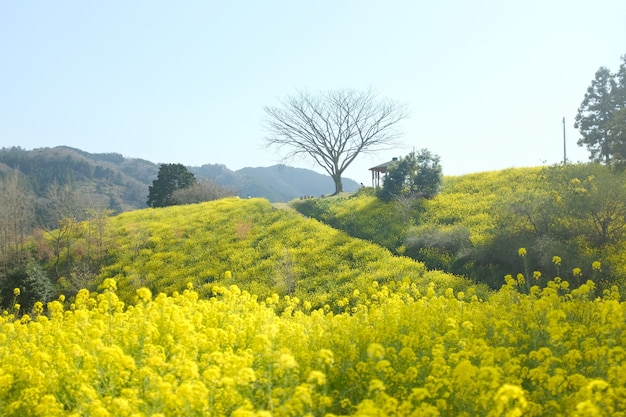 田舎の緑の丘