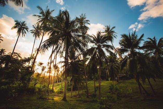 Зеленые джунгли таиланда - пальмы на фоне голубого неба.