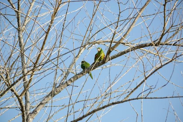 美しい夏の風景の中の青い空と木の緑のマイタカ
