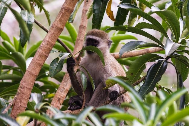 Зеленая обезьяна на дереве