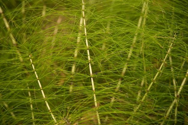 Зеленый естественный фон