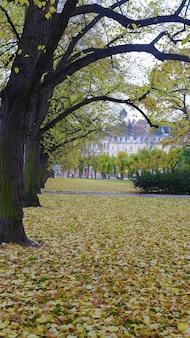 Земля покрыта желтыми листьями, падающими с деревьев осенью.
