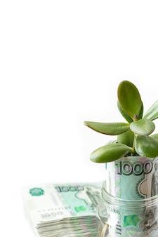 ガラス瓶の中の金貨から成長している木。ビジネスと金融の成長の概念のためのスペースをコピーします。白色の背景。