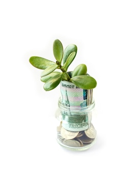 ガラス瓶の中の金貨から成長している木。
