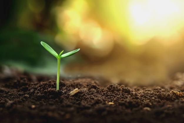 아침에 토양에 식물의 성장