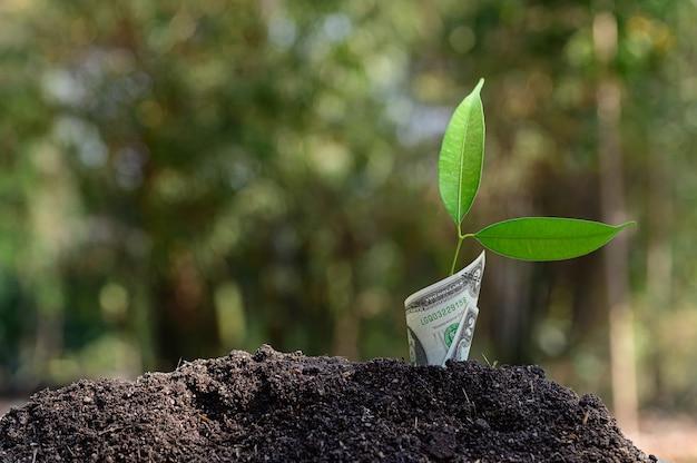 금융 비즈니스의 성장은 성장하는 나무로 표현됩니다.