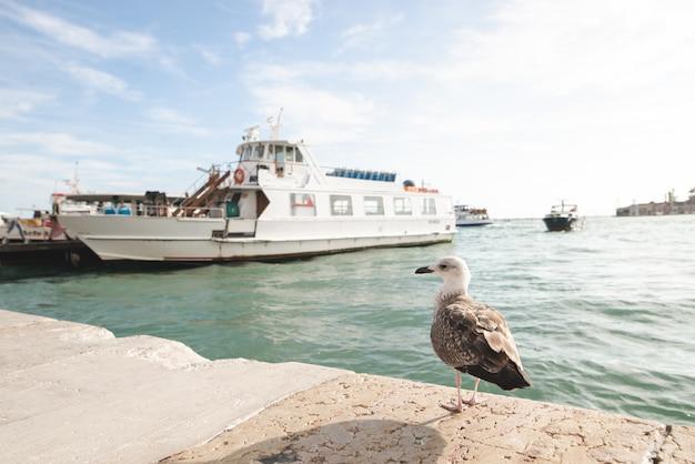 Чайка стоит на берегу в венеции