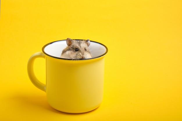 Хомяк в желтой чашке на желтом фоне копией пространства