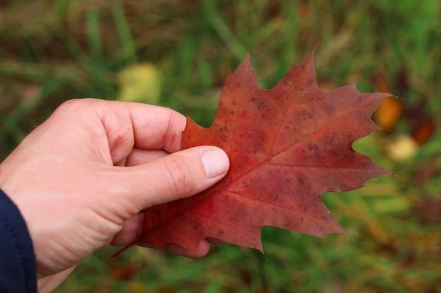 手は紅葉を持っています