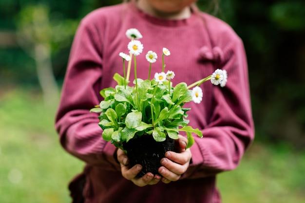 鉢に移植する準備ができている植物を持っている少女の手。