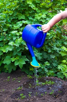 Руки маленькой девочки поливают грядки в саду помощница моей мамы