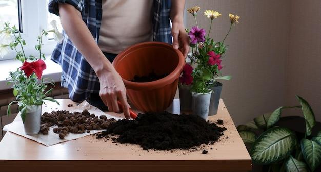 格子縞のシャツを着た女性の庭師の手は、鉢に花を植えます