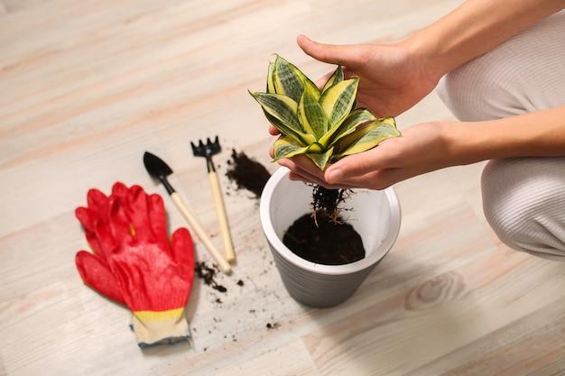 若い男の手が鉢植えの植物を持っています
