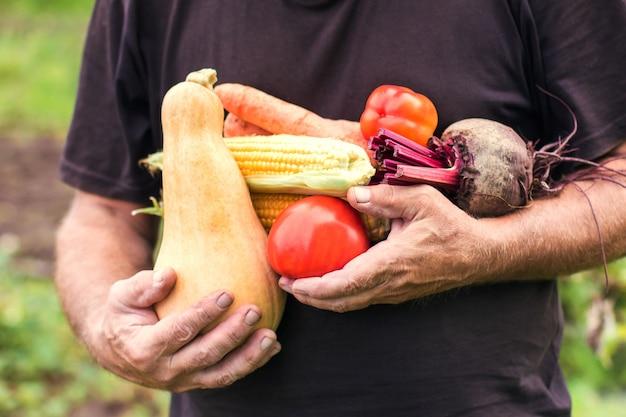 老人の手はあなた自身の庭の収穫成長する植物の野菜の新鮮な作物を持っています