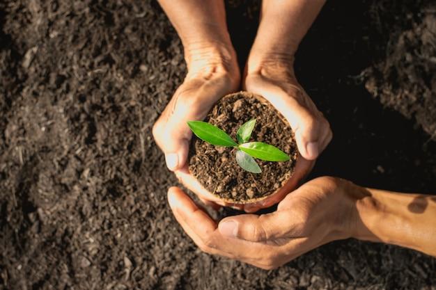 老婆の手と男の手が鍋に育つ苗を育てています。