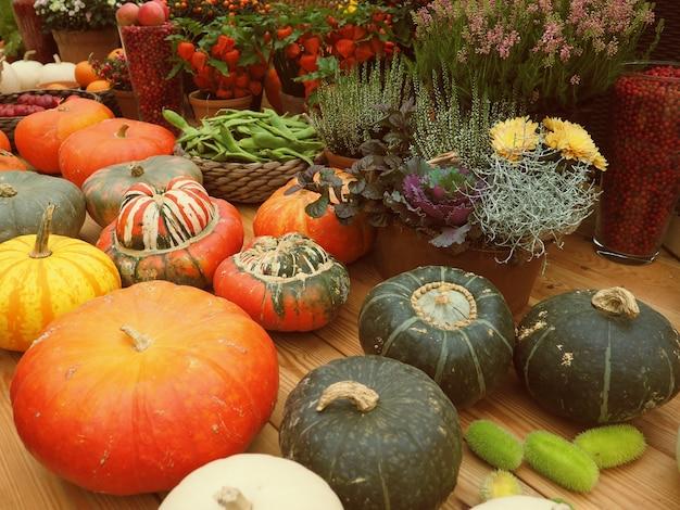 収穫、秋のカボチャの異なるライフスタイル。