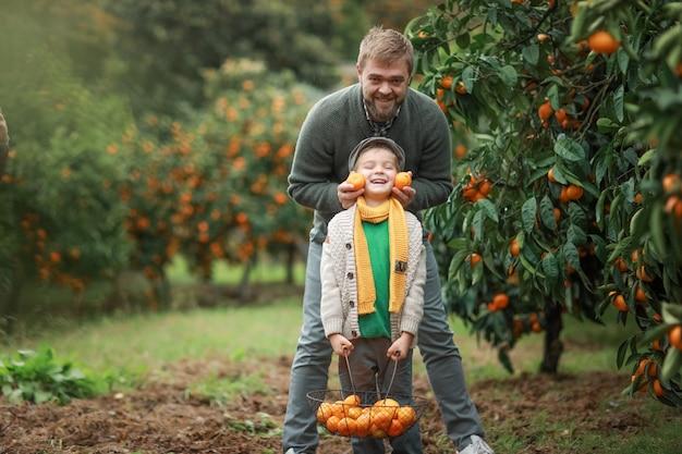 秋のオレンジの収穫。父と息子の笑顔