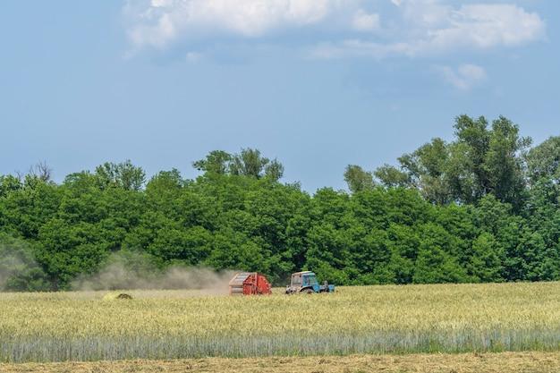 수확자는 들판에서 호밀을 수확한다