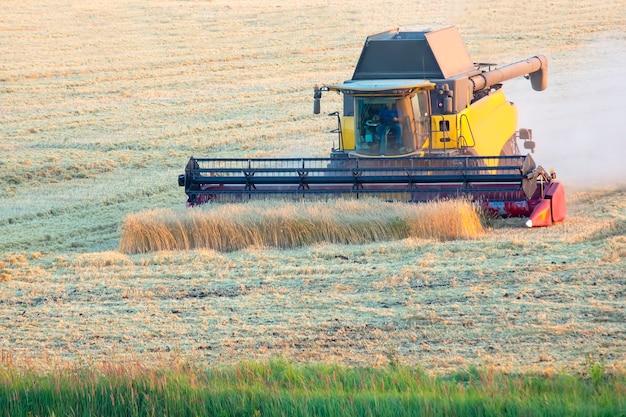수확기가 들판에서 밀을 수확하고 있습니다. 곡물 준비. 농업 경제학과 농업.